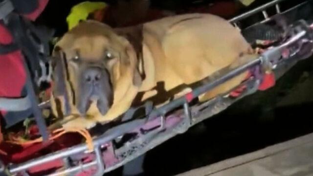 16.10.2019   Ratownicy znieśli z gór 90-kilogramowego mastifa