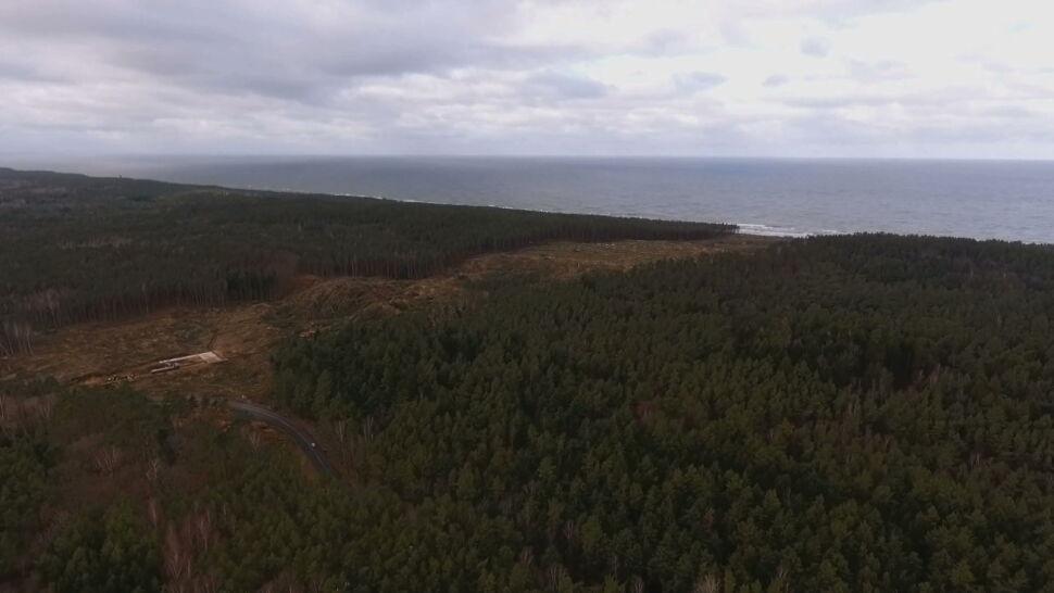 Wykarczowano teren na przekop Mierzei Wiślanej