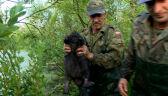 29.07.2015 | Bobry kontra ludzie. Tak pracują łowcy bobrów w Polsce