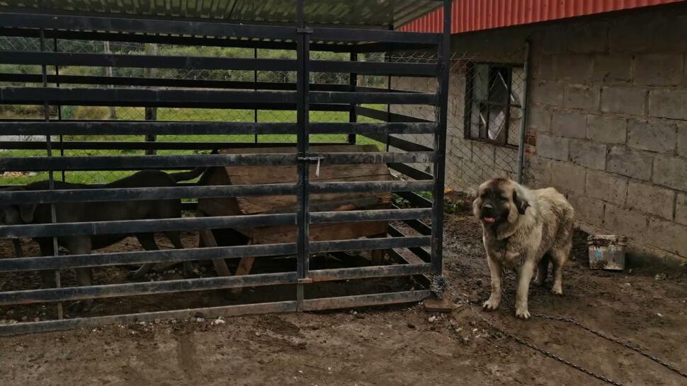 Somonino, Kaszuby: prawie 80 psów uratowanych z pseudohodowli