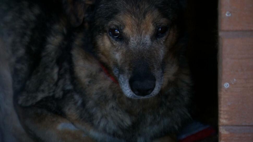 Pseudoschronisko w Radysach zamknięte. Wolontariusze szukają domów dla uratowanych psów