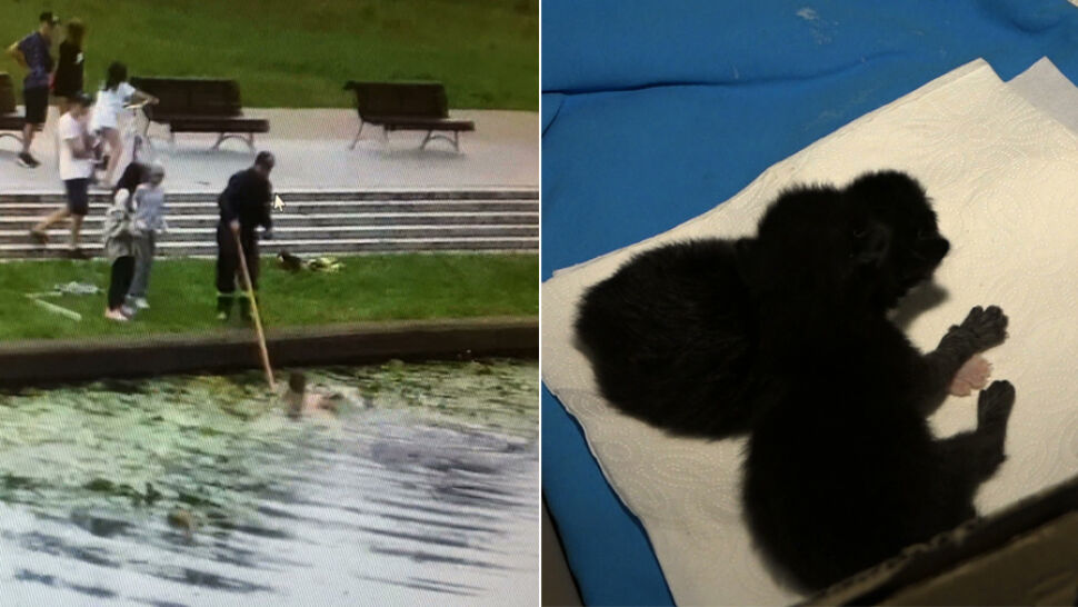 Małe kotki zostały wrzucone do rzeki, uratowała je pani Klaudia. Sprawą zajęła się policja