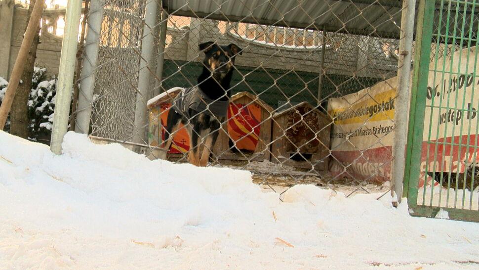 Zima doskwiera schroniskom dla zwierząt. Niektóre proszą o pomoc