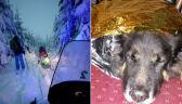 Oni szli na nartach, a ich pies musiał się przedzierać przez zaspy. GOPR uratował psa