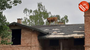 She climbed onto the roof and won in the reins. You have chosen the material July.
