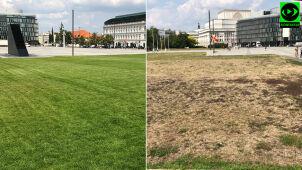 Trawa przy pomniku smoleńskim zielona, przy Grobie Nieznanego Żołnierza wyschnięta