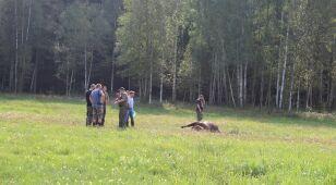 W Puszczy Augustowskiej znaleziono martwego żubra