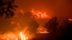 Pożary trawią Portugalię. Kilkadziesiąt osób rannych