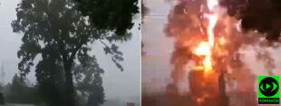 Błysk i huk. Reporter 24 uchwycił moment uderzenia pioruna w drzewo