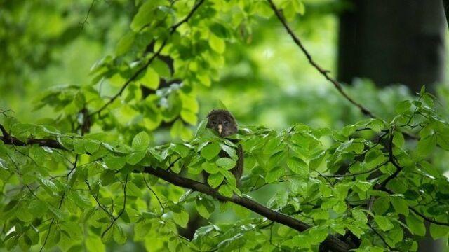 """""""Ornitologiczna sensacja na Śląsku"""". Od wiosny była trzymana w tajemnicy"""