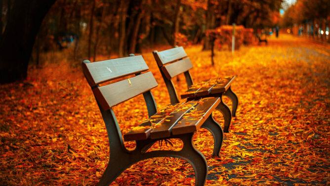 Prognoza pogody na dziś: słonecznie. <br />Jesienna aura sprzyja spacerom