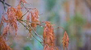 Pogoda na dziś: miejscami deszczowo, do 11 stopni