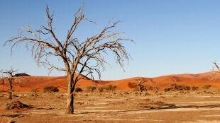 """Głód, destabilizacja polityczna i gospodarcza. """"Zmiany klimatu są nieuchronne"""""""