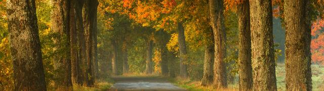 Nadeszła astronomiczna jesień. Niebo będzie pełne niespodzianek